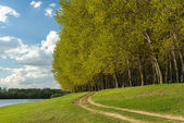 Summer forest and ground road near riverside — Stock Photo