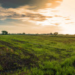 Stock Photo: Sun and clouds over field