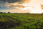 Sun and clouds over field — Stock Photo