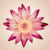 Vintage lotus — Stock Photo