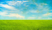 Grunge green grass and blue sky background — Stock Photo