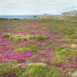 Stock Photo: Coastline heath
