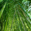 Bamboo wide angle — Stock Photo #13373069