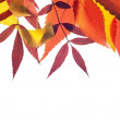 Stock Photo: Fall leaves background