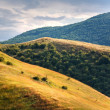 Golden mountain field — Stockfoto