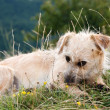 Cute little dog — Stockfoto