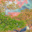 Japanese fall background — Stockfoto