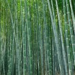 Royalty-Free Stock Photo: Bamboo forest