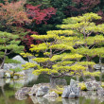 Zen pine tree — Stock Photo #13374914