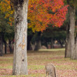 Deer grazing in Nara park - Stock Photo