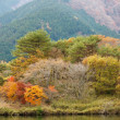 Japanese country autumn — Stock Photo