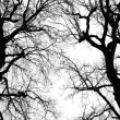 Oak tree winter silhouette — Stockfoto