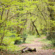 Wild path entrance in forest - Stock Photo