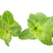 Two mint stem — Stock Photo #13376581