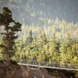 Annapurna fir forest — Stock Photo