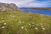 Wild flowery coastline hdr — Stock Photo