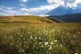 Tabiat manzarası — Stok fotoğraf