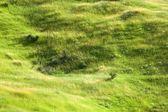 Fresh meadow — Stock Photo