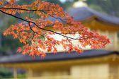 Japanese autumn — Stock Photo