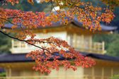 Japanese fall colors — Stock Photo
