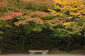 Japanese autumn scenery — Stock Photo