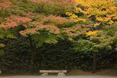 Paisagem de outono japonês — Foto Stock