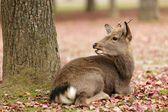Cute jelen — Stock fotografie