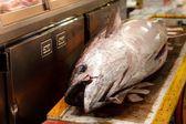 Fresh tuna — Stock Photo