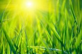 Grass background — Fotografia Stock
