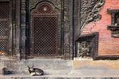 Pashupatinath tapınağı giriş — Stok fotoğraf