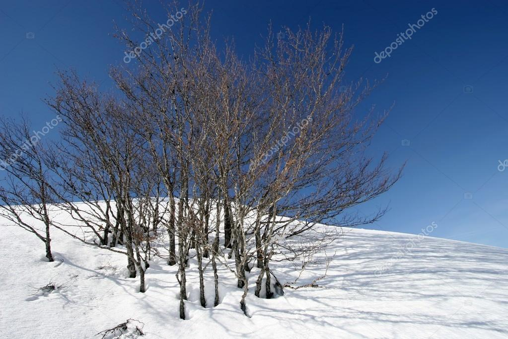 Trees in snow covered landscape with blue sky and shadows — Stock Photo #13373910