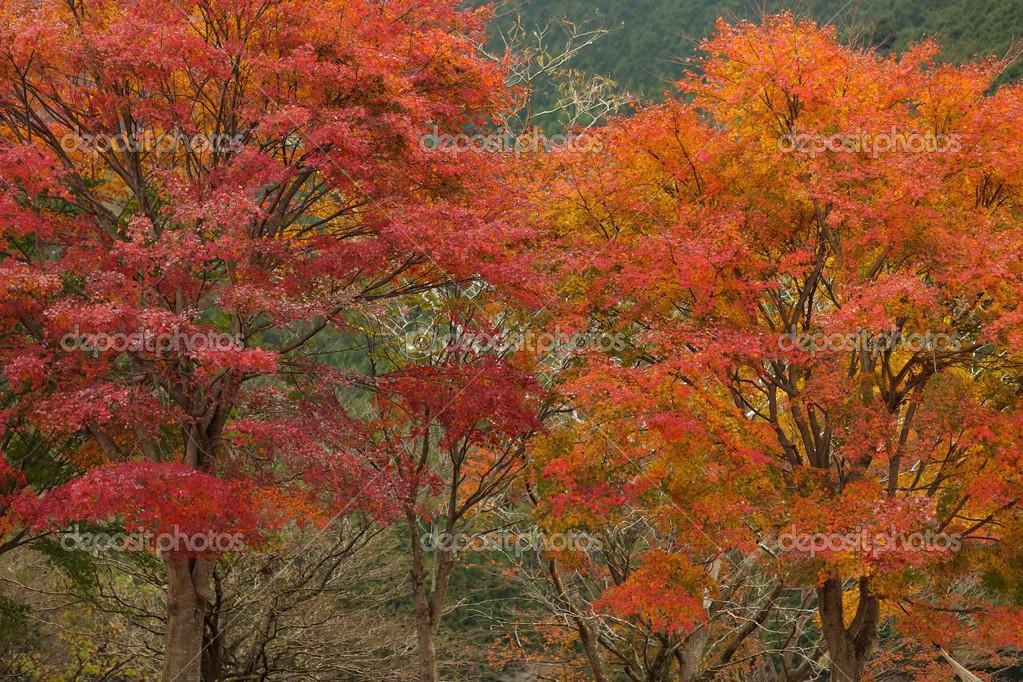 Αποτέλεσμα εικόνας για Κόκκινο Δέντρο