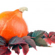 Stock Photo: Pumpkin on leaves