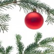 Bauble on christmas tree — Stock Photo #13380985