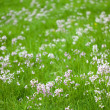 Meadow spring — Stock Photo