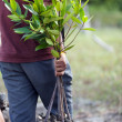 Stock Photo: Mplanting new tree