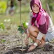 Stock Photo: Mangrove reforestation