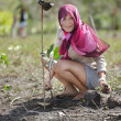 Planting mangrove tree — Stock Photo