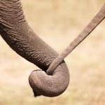 Elephant love — Stock Photo #13382406