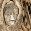 Buddha head in vines - Stock Photo