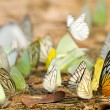Butterfly swarm - Stock Photo