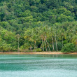 Tropical beach and forest - Stock Photo