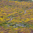 Flowered moor — Stock Photo