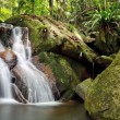 Waterfall in rainforest — Stock Photo