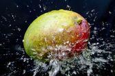 Mango and water splash — Stock Photo