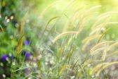 Fresh meadow background — Stock Photo