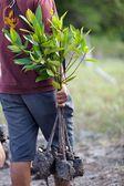 Hombre arbol nueva plantación — Foto de Stock