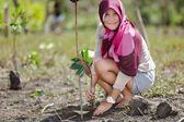 Mangrove reforestation — Stock Photo