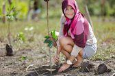 Reforestación de manglar — Foto de Stock