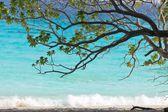 Tree and beach — Zdjęcie stockowe
